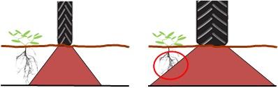 Monte en pneus étroits pour préserver les racines