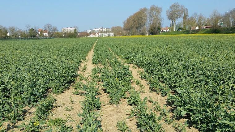le tassement du sol bloque le développement des racines