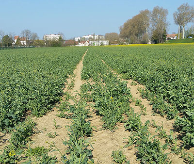 tassement sol = plantes chétives